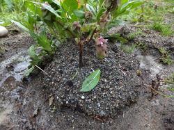植物を育てた島.JPG