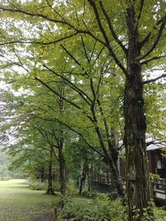 森林植物園 かつら.jpg