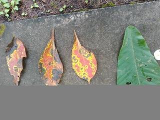森林植物園 葉っぱアート.jpg