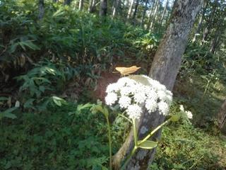 森林植物園 蝶々.jpg