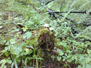 森林植物園きのこ2.jpg